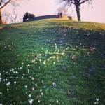 Frühling im Weißenburgpark