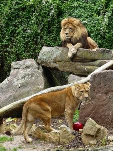 Foto: ©Petra Medan/Zoo Heidelberg