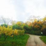 Blick durch die Weinberge