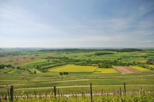 Weinberg und Felder, gesehen von der Berggaststätte Wunnenstein
