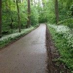 Strecke durch einen Wald