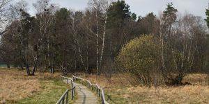 Schopflocher Torfmoor – ein Hochmoor der Schwäbischen Alb